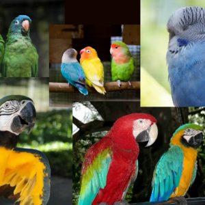 Parrots, Parrakeets